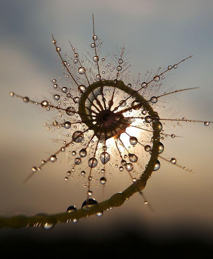 beautiful sunrise on plant