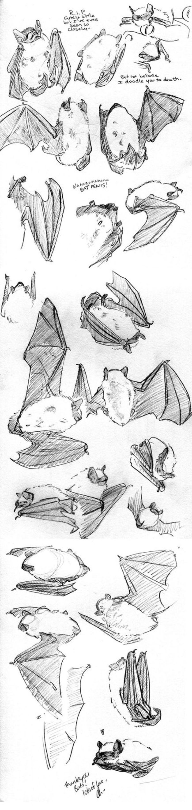 Wittle bat sketches by batlesbo on @DeviantArt