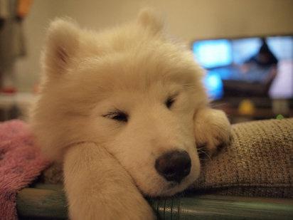 El tumor de mama en perros y gatos | Cuidar de tu mascota es facilisimo.com