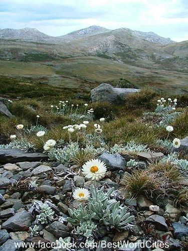 Snowy Mountains (Australia) : I will go trail riding here!