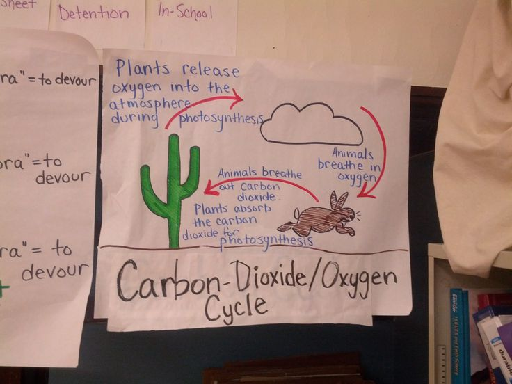 Carbon Dioxide - Oxygen Cycle