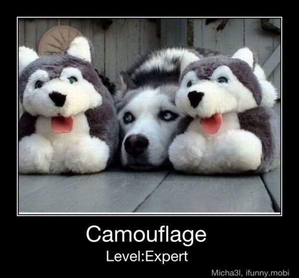 Cute (& smart): Slippers, Puppies, Level Expert, Friends, Funny Dogs, Siberian Husky, Moon Moon, Camouflage, Animal