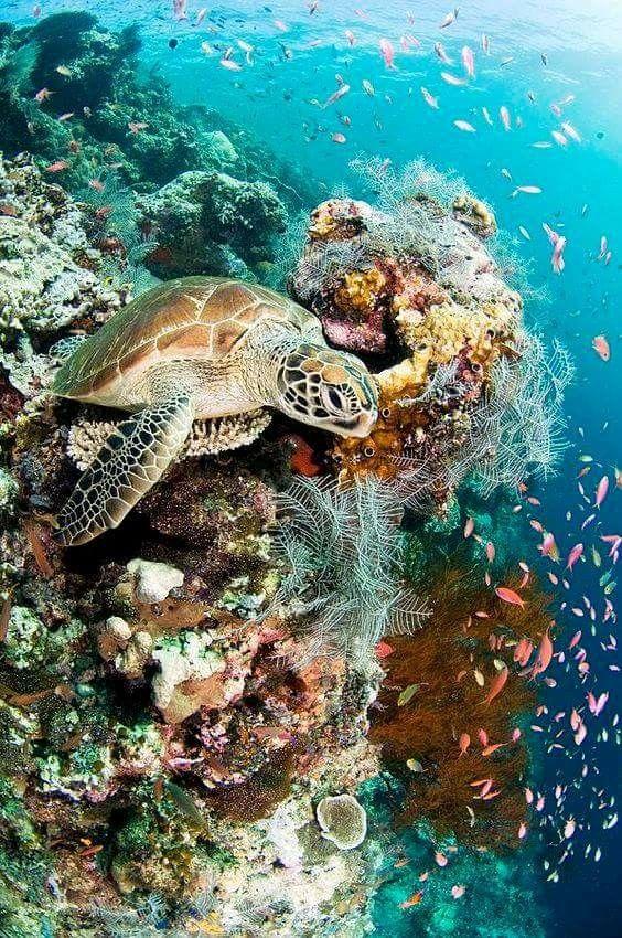 Pin Von Lynn Curry Auf Amazing Seas Unterwasser Tiere Wassertiere Wasserschildkroten