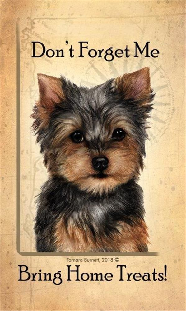 Details About Yorkshire Terrier Yorkie Bring Home Treats Dog