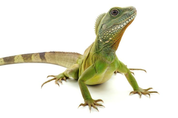 A first aid kit for your reptile or exotic pet is a worthwhile investment to keep your reptile or amphibian happy and healthy. But of course it goes without saying that if your reptile is really ill you should take it to the vet rather than trying to solve the problem yourself.  A first aid …