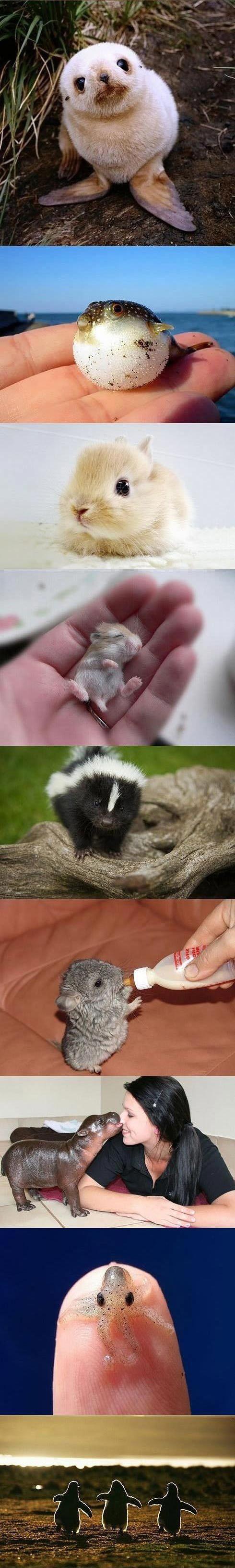 OMG. Adorable Precious Baby Animals  originally pinned via http://pinterest.com/alararox/