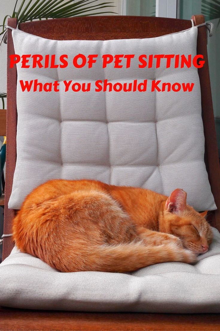 Considering pet sitting to off set your travel expenses? There is more to pet sitting than just feeding Fido and that goes for both parties. Here are some tips from my personal pet sitting experiences. http://www.theislanddrum.com/pet-sitting-what-you-should-know/