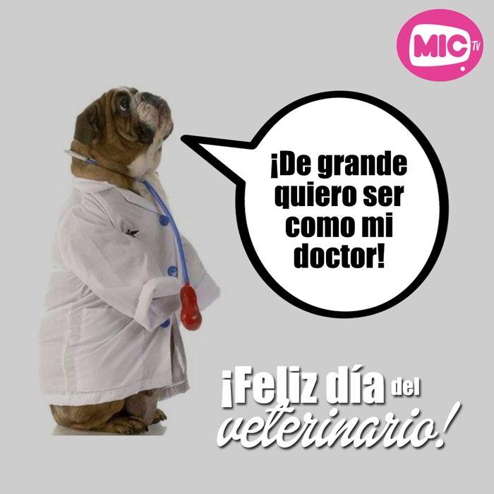 ¡Feliz día del veterinario! #AmorAnimal #MICTV