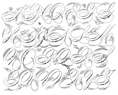 342 best Calligraphy......Spencerian, Copperplate and