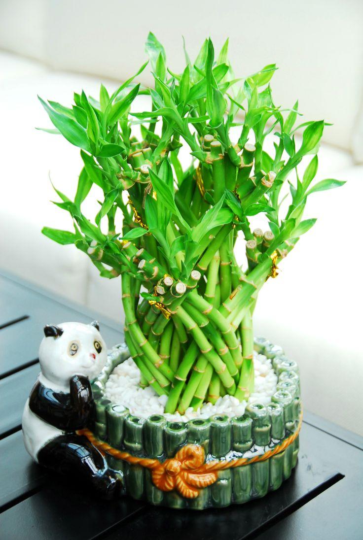 Dragon arrangement lucky bamboo 4799 this beautiful