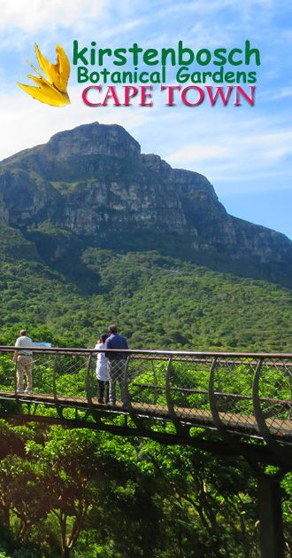 One of the most beautiful botanical gardens in the world: http://bbqboy.net/visit-kirstenbosch-botanical-gardens-cape-town/ #kirstenbosch #capetown #southafrica