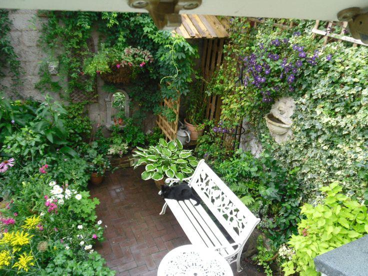 Courtyard garden tips