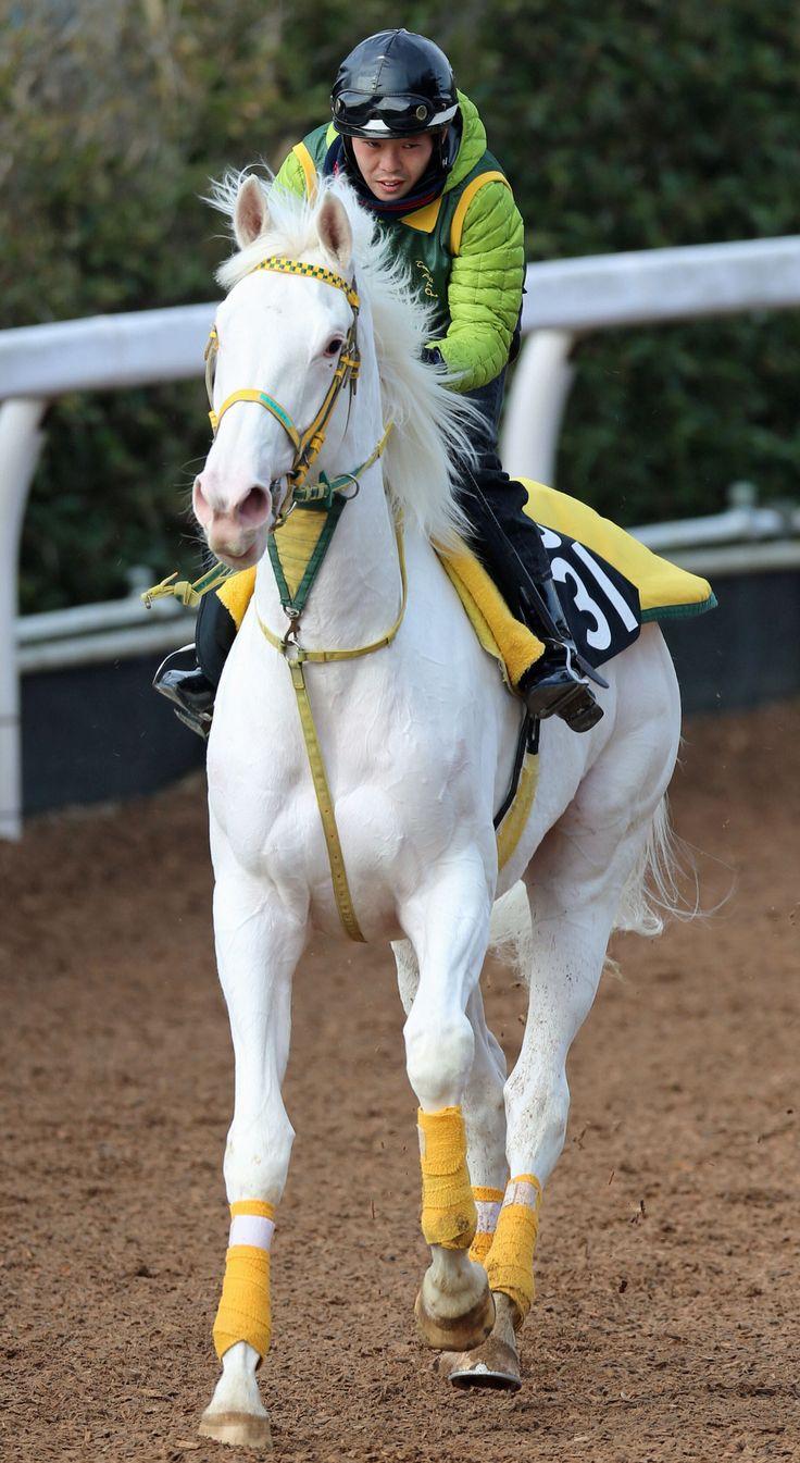 ユキチャンの娘、白毛のシロインジャー(牝3、父ハービンジャー)がデビューする。体重530kgのビッグガールとのこと♡
