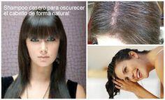 Shampoo casero de sábila y romero para oscurecer el cabello ~ Belleza y Peinados