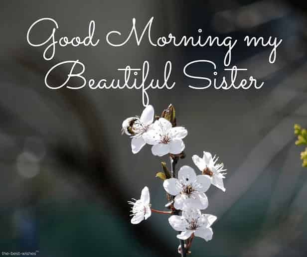 120 Lovely Good Morning Wishes And Greetings For Sister Good Morning Sister Quotes Good Morning Sister Images Good Morning Sister