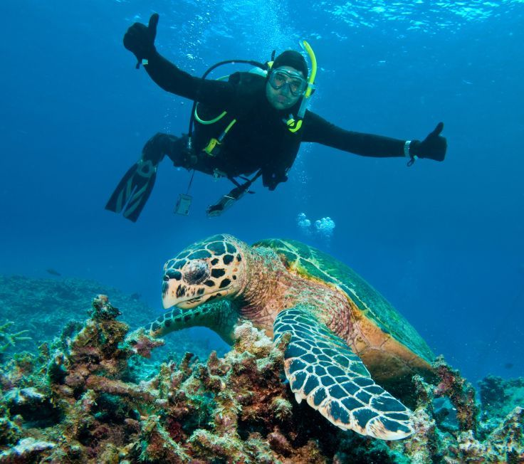 Three reasons everyone should try scuba diving...  ( pictured: scuba diving with turtles )