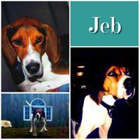 Fostered -Dec 2014/Adopted-Jan 2015/Returned-Apr 2015
