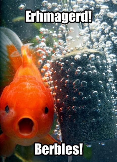 Lol this one I can get behind: Phones Backgrounds, Funny Pics, Brown Eye, Funny Pictures, Bubbles, So Funny, Goldfish, Finding Nemo, Animal