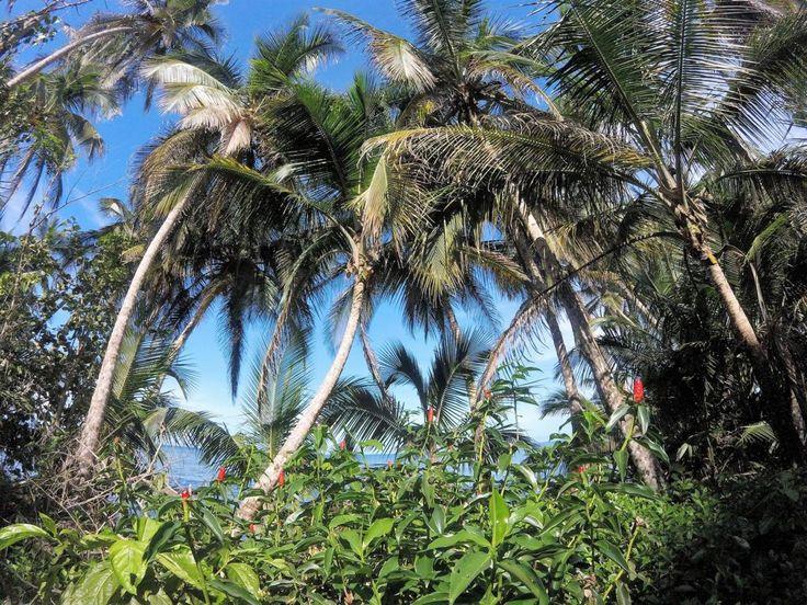 Unser Reisebericht handelt vom Nationalpark in Cahuita