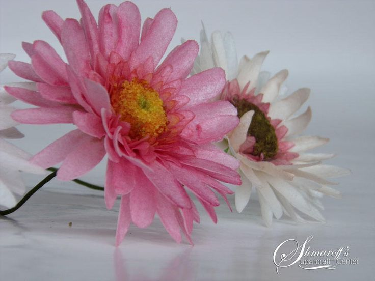 114 best rice paper flowers images on pinterest tissue paper wafer paper gerbera by petya shmarova mightylinksfo