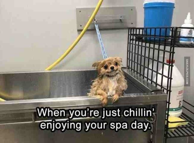 22 Funny Animal Pictures