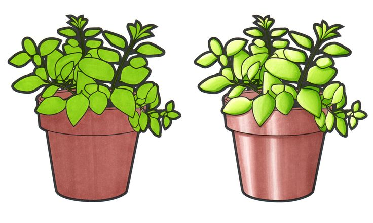 Comparison between 2 standard markers and 2 Chameleon Color Tones. V. Davies