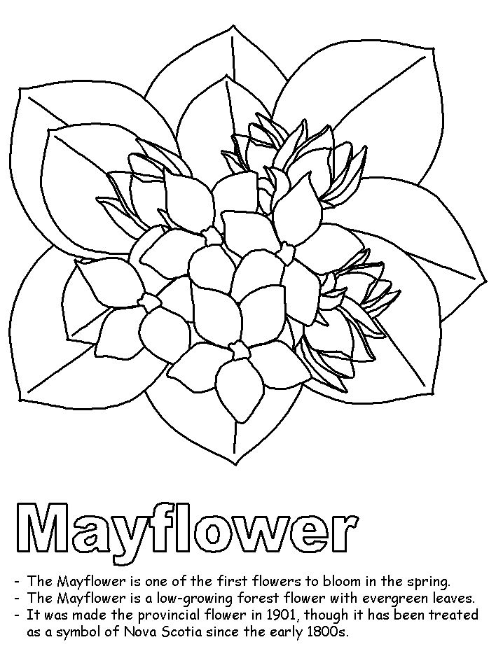 massachusetts state symbols coloring pages - photo#23