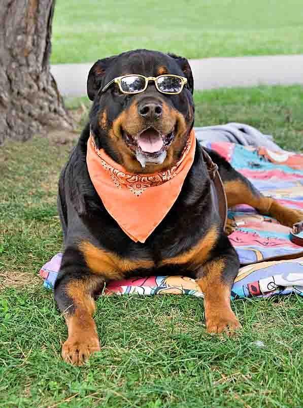 Cool Female Dog Names Hundreds Of Hip Naming Ideas Cool Female