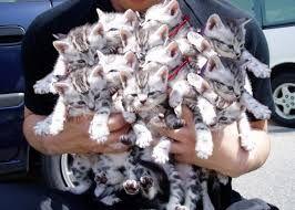 Картинки по запросу котята приколы