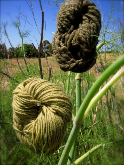 yarn dyed with fennel