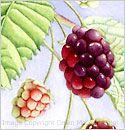 Painting blackberries