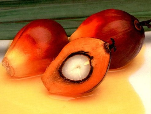 Norway Cuts Palm Oil Consumption 64% to Protect Rainforest : TreeHugger