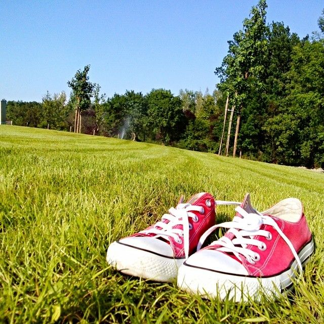 Converse #converse #redconverse #sunny #today #grass #green #red #sky #bluesky #beautifulnature #beautifulweather #follow4follow #converseallstar