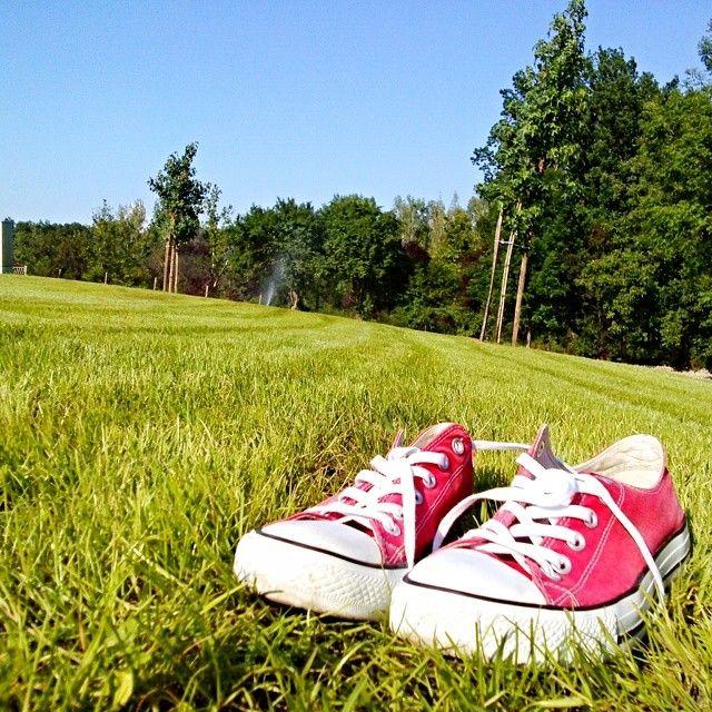 Converse #converse #redconverse #sunny #today #grass #green #red #sky #bluesky #beautifulnature #beautifulweather #follow4follow #converseallstar