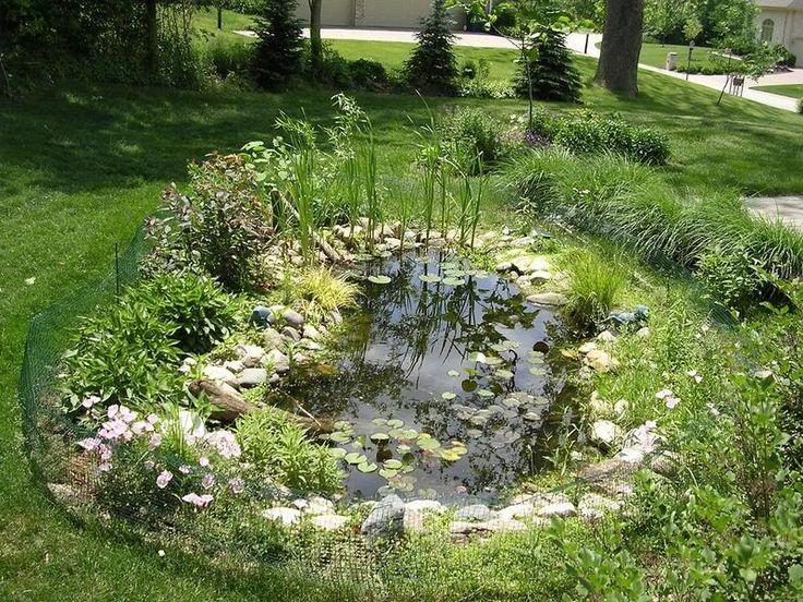 14 Best Backyard Turtle Pond Images On Pinterest Turtle Pond Turtles And Ponds