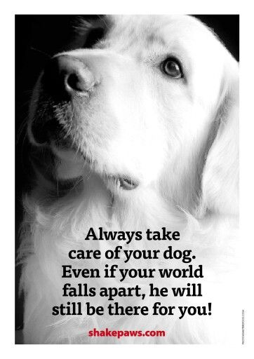 Take care of your animals!!