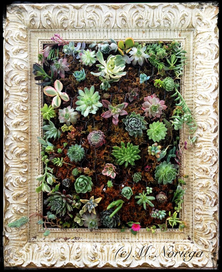 Hanging vertical garden of succulents sempervivums and the for How to make a vertical garden frame