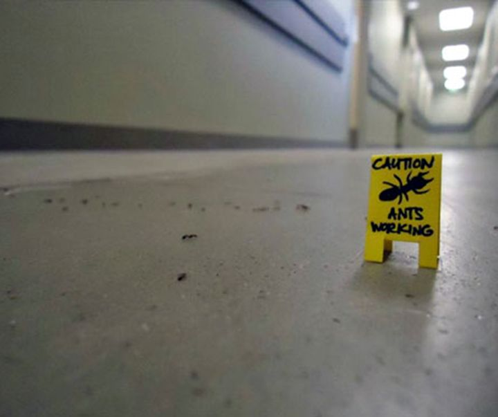Wow there Pete, caution ants working! #FridayFunny #StilesGeorge
