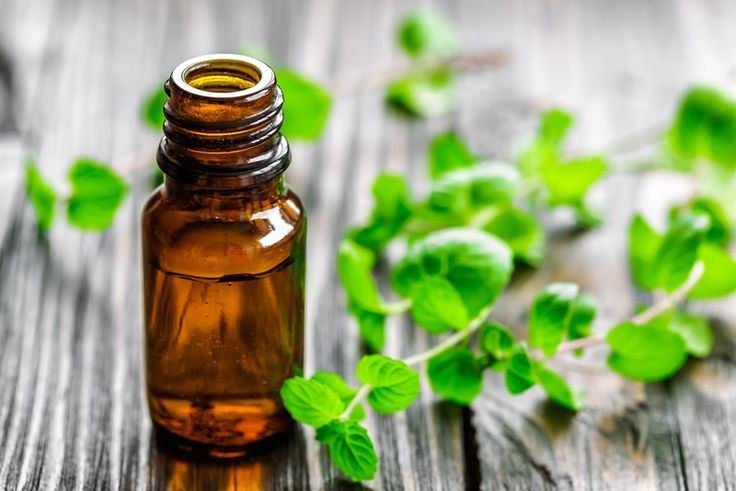 Mint oil in a bottle and fresh leaves