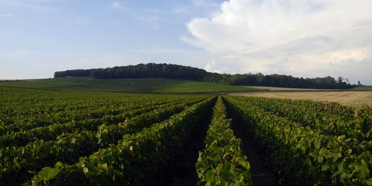 Whether the producer is one of the great houses -- producing millions of bottles a year -- or a small, grower producer, one can tell at a quick glance that one is in Champagne and not anywhere else in the wine world.