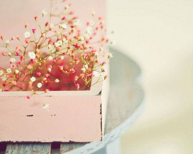 Breathtaking: Pink Flower, Bookmarks, Challenges, Pastel Cerveza Tennis, Little Flower, Ana Rosa, Baby Breath, Beautiful Flower Photography, Flower Boxes