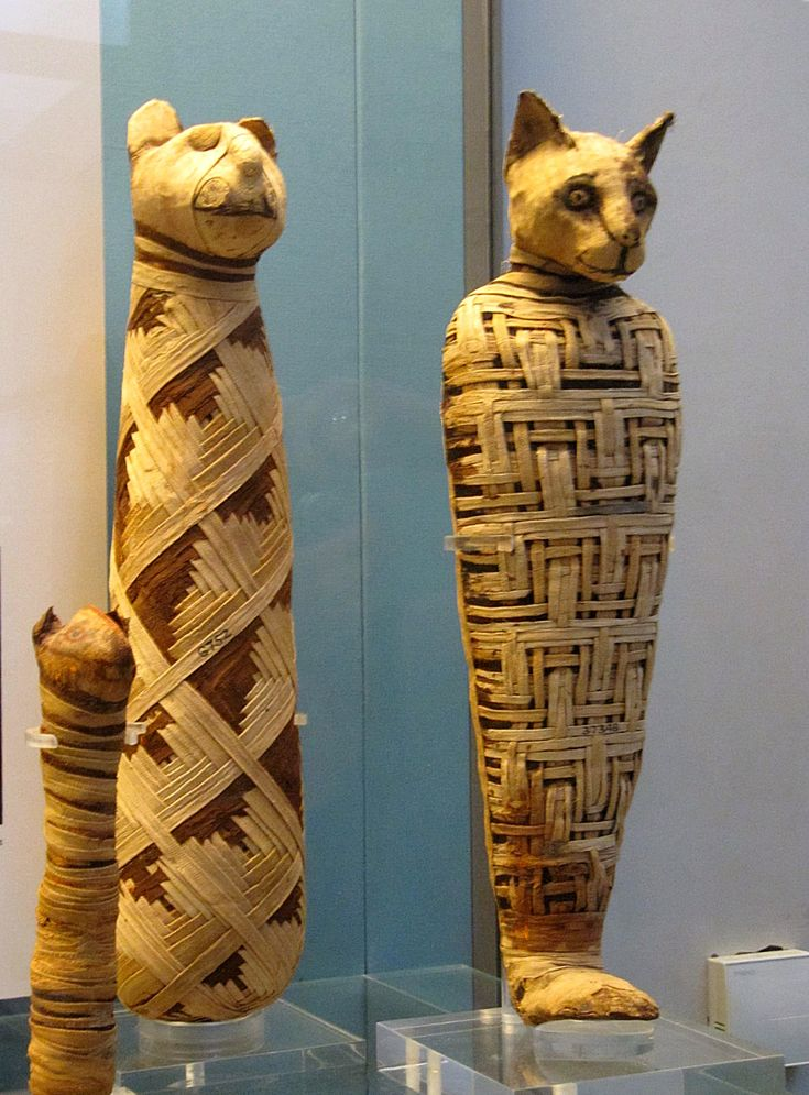 egyptian cat mummification Google Search Ancient egypt