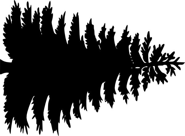 Pine Tree Outline Large Pine Tree Clip Art Vector Clip
