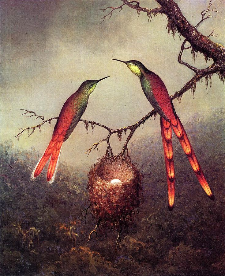 Two Hummingbirds Guarding an Egg, by Martin Johnson Heade, 1864. Oil on canvas.