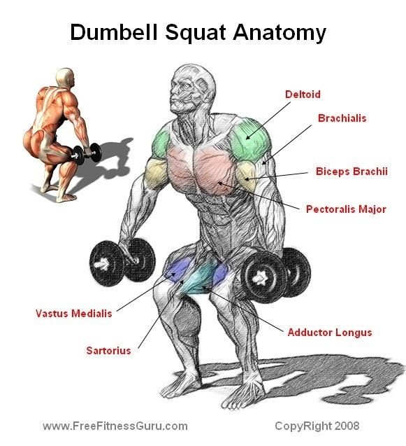 Deadlift Muscles Diagram Squats muscle used   G...