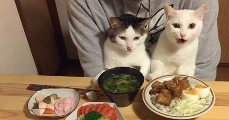 #Japanese #Couple Takes Photos of Their #Cats Staring At Them While They Eat http://ibeebz.com