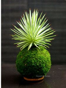Zen and modern kokedama