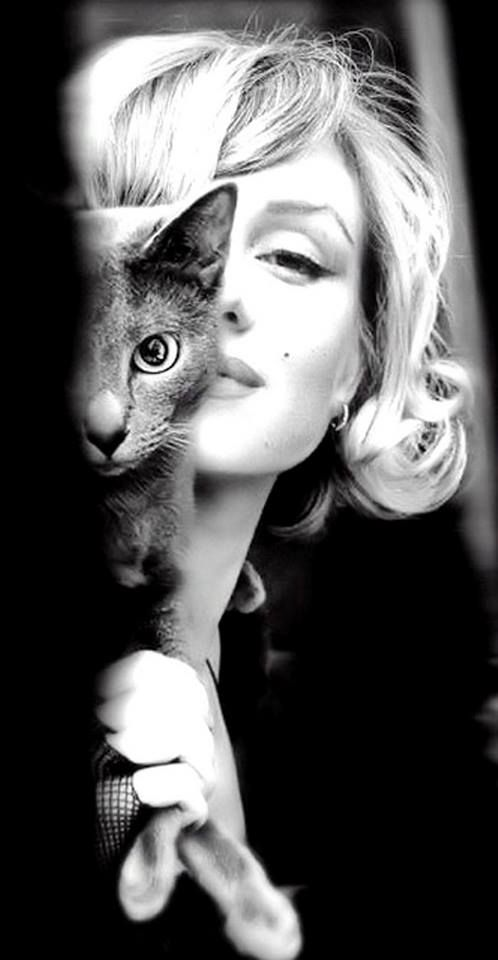 Marilyn Monroe with a Russian Blue. This picture makes me smile. That kitty looks just like my kitty Barbie. ( =: