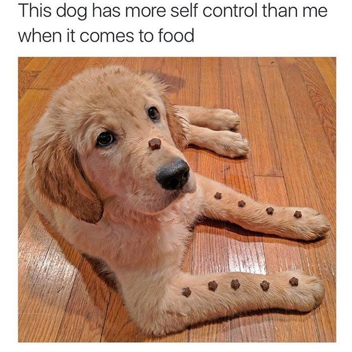 Best Funny Dog Memes Ideas On Pinterest Dog Memes Laughing - This dog has some serious self control that will make you laugh