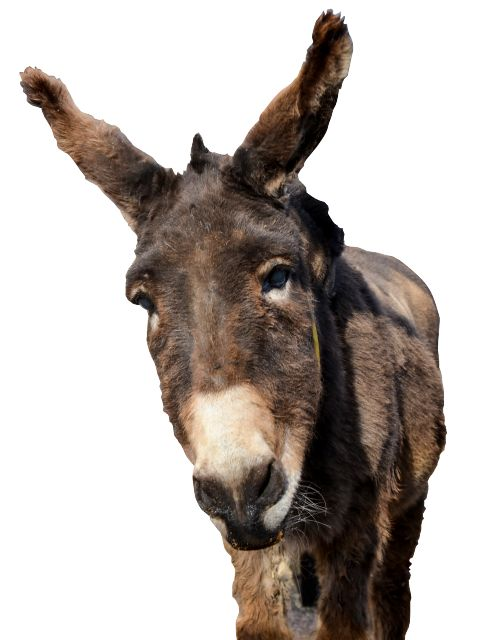 816 best donkey and mule page images on pinterest mini